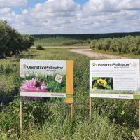 Operation Pollinator_Nutrifarms (2)_low